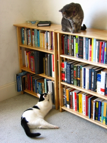 loki and mr shadow at the bookshelf