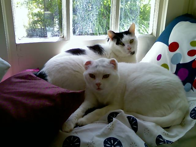 loki and mr bell on a pillow