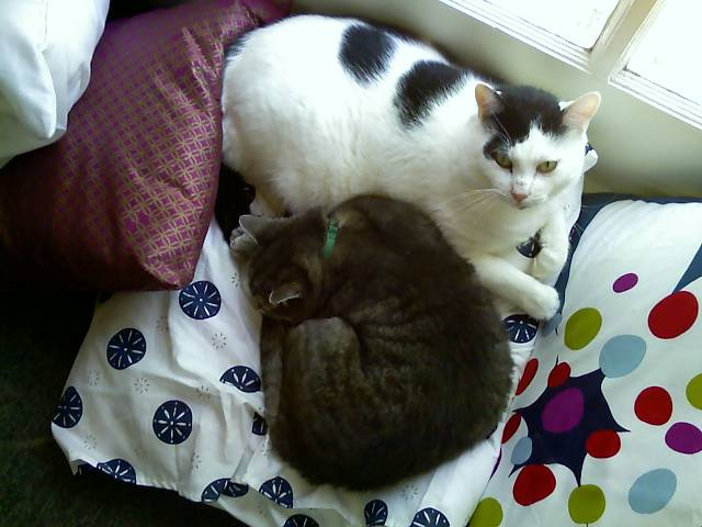 loki and mr shadow on a pillow